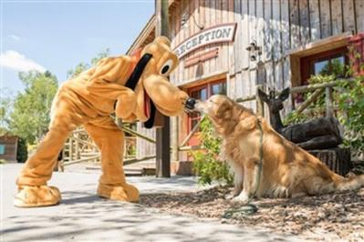 Chiens disneylandparis2