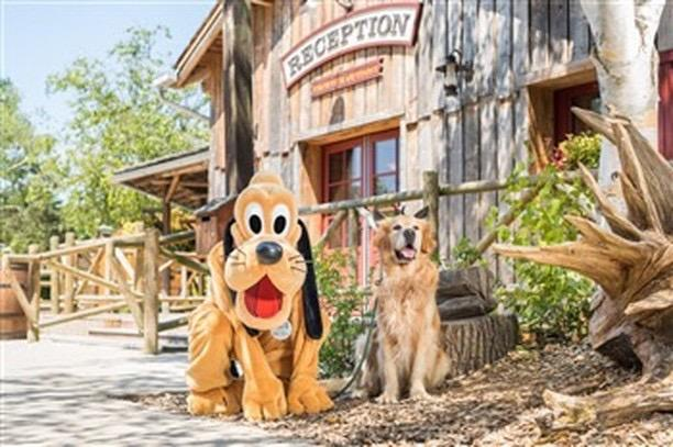 Chiens disneylandparis3